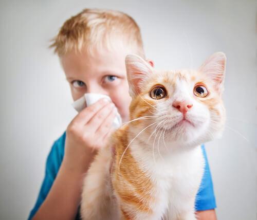 bambino allergico al gatto