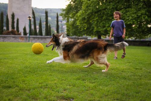 Le 10 razze di cani adatte ai bambini