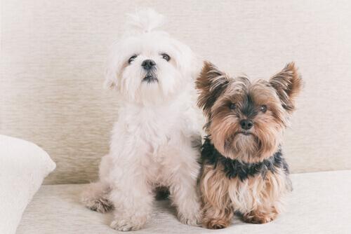 Mito o realtà: un anno di vita di un cane equivale a sette di un umano?