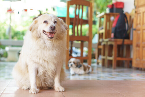 7 segnali per capire se il vostro cane soffre di artrite