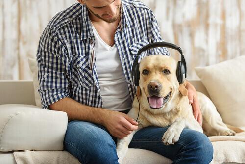 Secondo gli esperti, i cani amano il rock