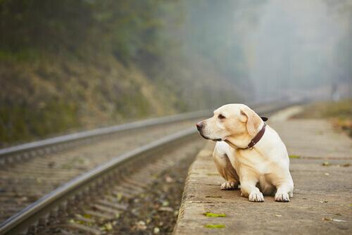 Perché alcuni padroni abbandonano i loro animali?