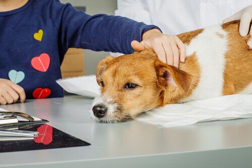 Diventare tecnico di interventi assistiti con gli animali