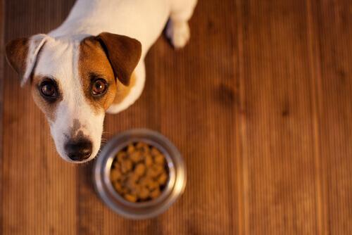 Consigli per i problemi di stomaco del cane
