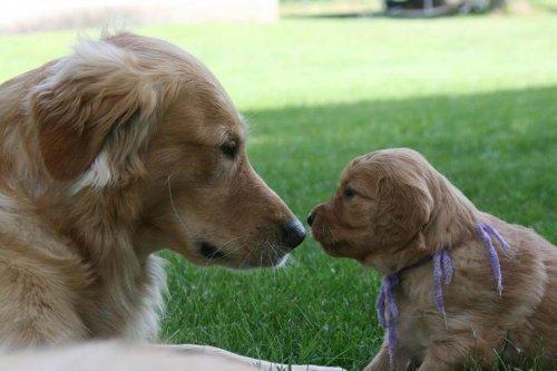Avidog, l'applicazione che aiuta cani, giovani e nonni
