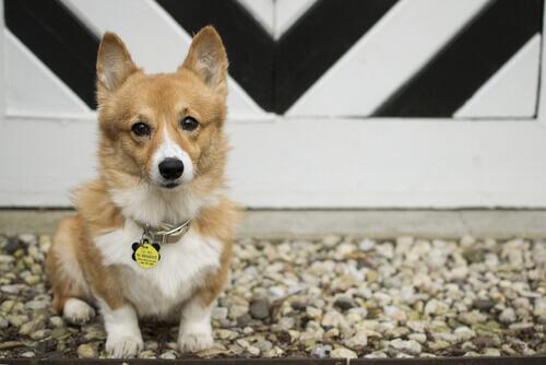 È possibile cambiare nome al proprio cane?