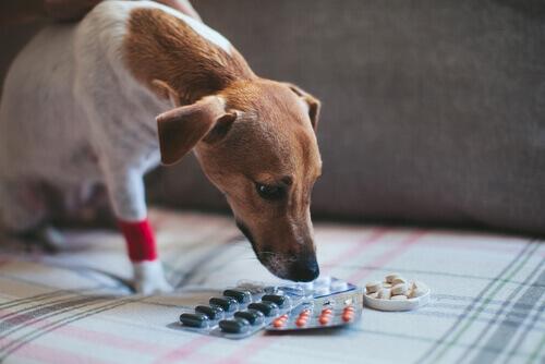 Si può somministrare l'aspirina ad un cane?