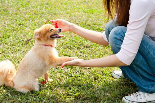 Come salutare un cane per la prima volta