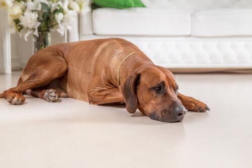 Il pessimismo è un pericolo anche per i cani