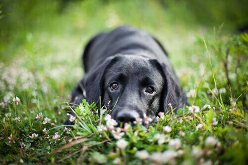 Esistono cani muti?