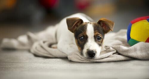Come capire se in un cane qualcosa non va?