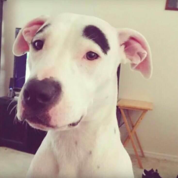 8 cani con le macchie sul pelo più incredibili