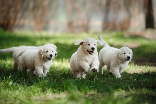 Come individuare una corretta socializzazione in un cane