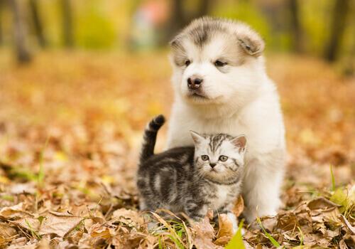 Cani o gatti: chi vince?