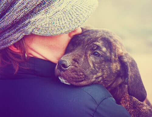 Non bisogna trattare il proprio cane come un bambino
