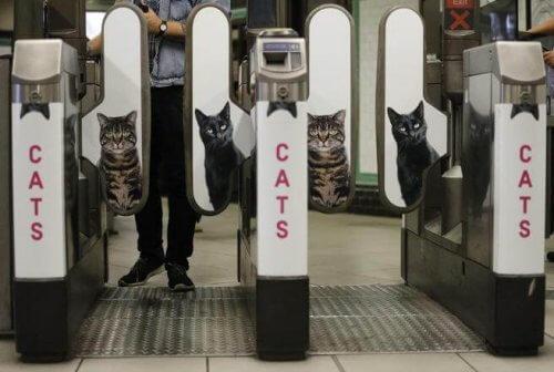 Foto di gatti al posto delle pubblicità nella metro di Londra