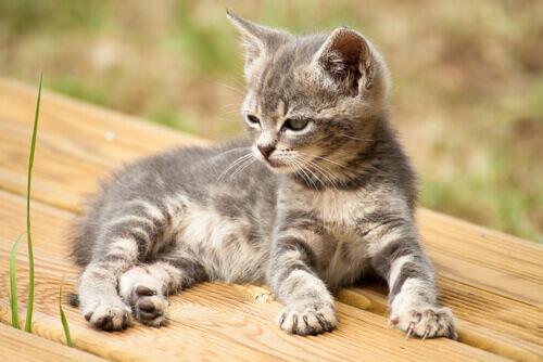 14 nomi creativi per il vostro nuovo gatto