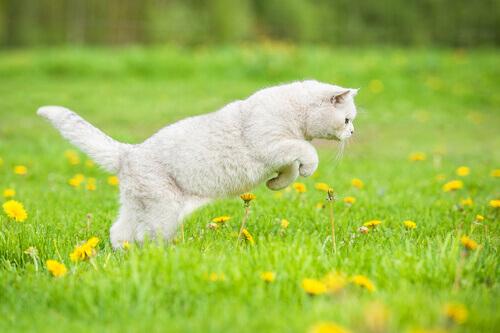 Per quale motivo i gatti amano andare a caccia?