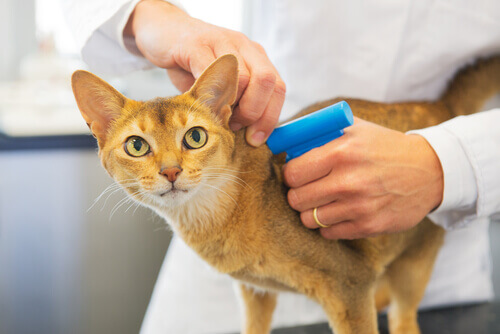 """Il microchip, la """"tessera sanitaria"""" per animali"""