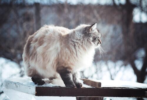Foto di cani e gatti che amano l'inverno
