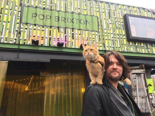 Bob, un gatto di strada