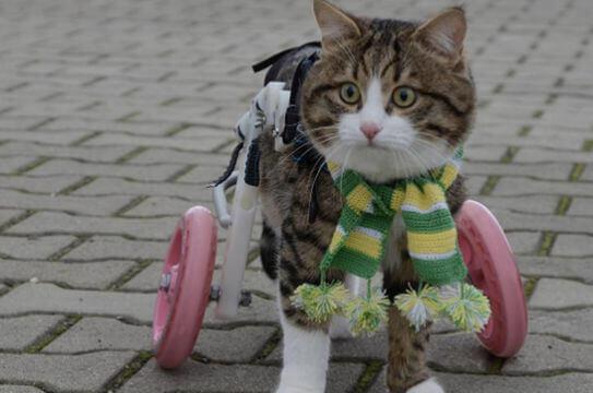 gatto zampe bioniche