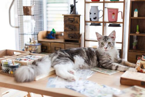 Cinque libri sui gatti che vi piaceranno moltissimo