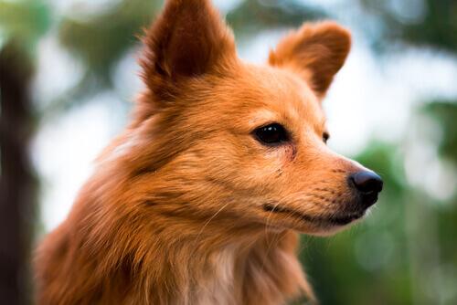 I primi 6 segni dell'oroscopo canino