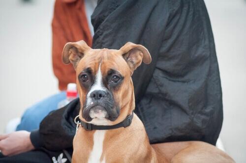 Terapia neurale per i cani