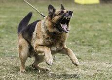 Cosa fare con un cane aggressivo