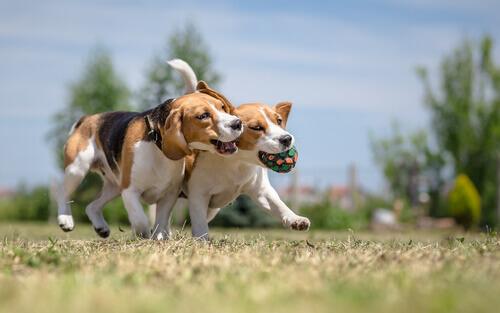 I 3 modi migliori per far socializzare un cane