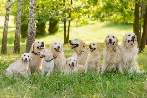 Scopriamo qualcosa in più sull'oroscopo canino