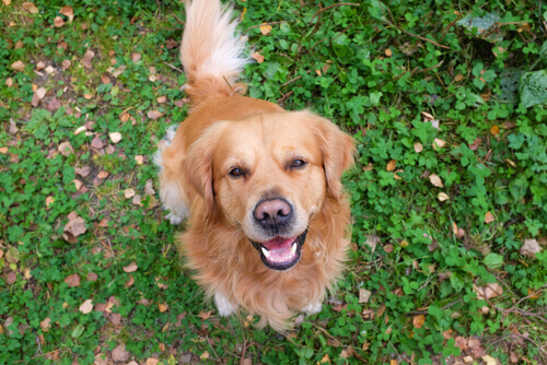 oroscopo canino cane sul prato