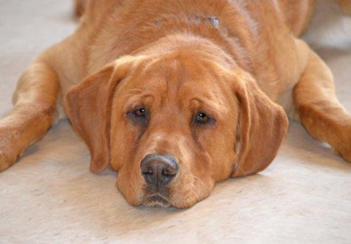 La storia di Eastwood, il cane che nessuno voleva