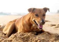 Un cagnolino seppellisce il suo miglior amico