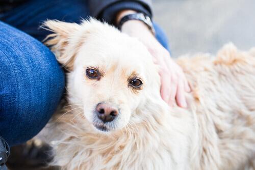 Le risposte a tutte le vostre domande sui cani
