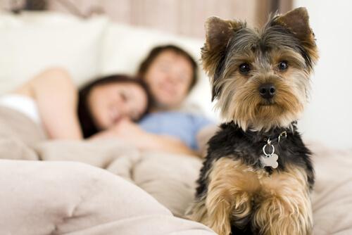 cagnolino e coppia che dorme