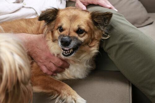 La causa dell'aggressività non è da ricercare nel cane