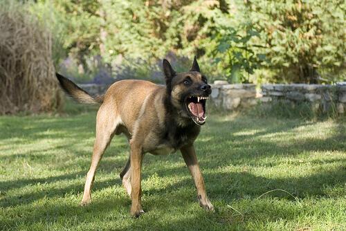 cane-arrabbiato-movimento-della-coda