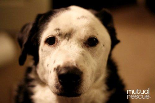 Un cane ha salvato la vita al suo padrone obeso