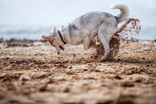 Cosa fare quando il cane nasconde il cibo?