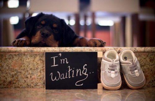 E' possibile far vivere insieme neonati e cani?