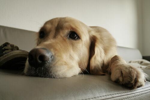 Istinti del cane che dobbiamo soddisfare