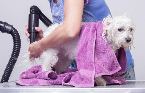 I rischi dei nodi nel pelo dei nostri animali