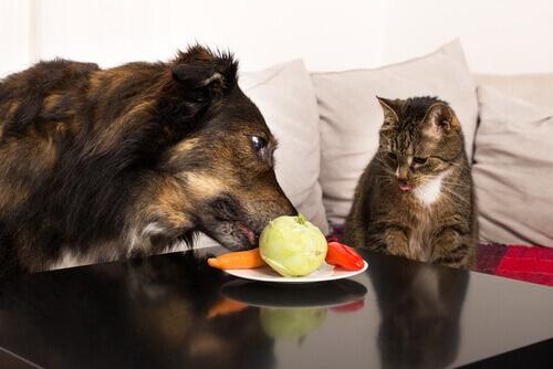 Quale frutta e verdura scegliere per i nostri animali?