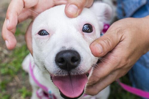 Come aiutare un cane che ha la fobia dei rumori