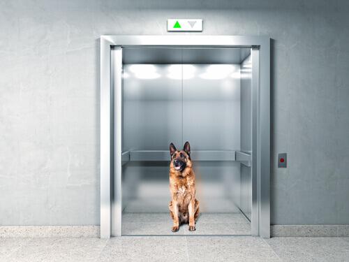 Un cane rimane intrappolato in un ascensore