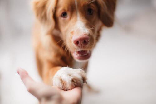 Mantenere un cane durante una crisi economica