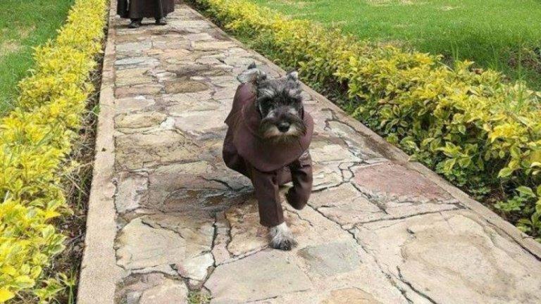 Scopriamo la storia del cane monaco