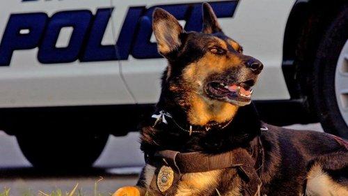 Cane poliziotto va in pensione